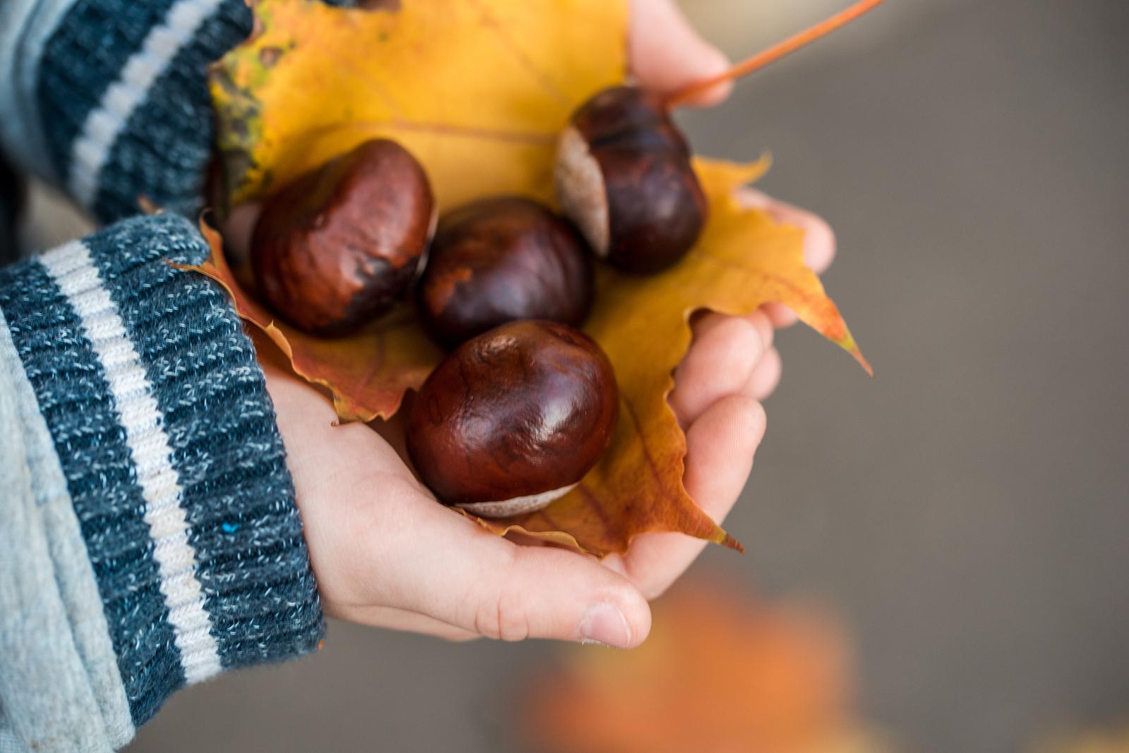 L'autunno con le sue castagne